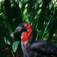 Птица-носорог — главный символ парка птиц в Куала-Лумпуре.Малайзия! :: Александр Вивчарик