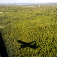 Под крылом самолета о чем-то поет зеленое море тайги :: Наталья Жукова