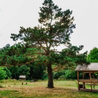 лес :: Олеся Енина