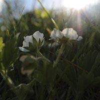 Весна :: Елена Демина