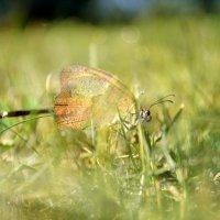 Сказочный мир бабочек... :: *MIRA* **
