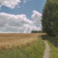 поле....русское поле :: Александр Солуянов