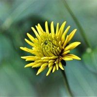 цветок :: Аркадий