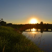 Вечернее солнышко. :: Валерий Медведев