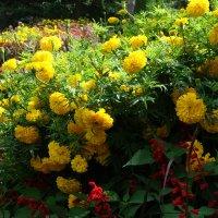 Цветы замка Трауттмансдорф...(Италия) :: Galina Dzubina