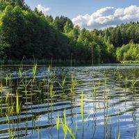 Лесное озеро :: Ольга Бородина