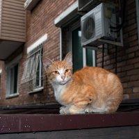Бездомный котёнок, Владивосток Фонтанная 35, остановка Фонтанная. :: Сергей Бойко