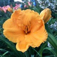 Мир любимых цветов :: Наталья Маркелова
