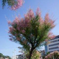 Не известное мне, но симпатичное деревце :) :: Irina Shtukmaster