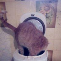 суп из кошки :: Светлана Краснова