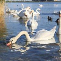 Озеро Сасык :: Татьяна Панчешная