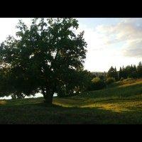 В лучах удмуртского солнца :: Виктория Нефедова