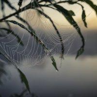 Летнее утро :: Юрий Никульников