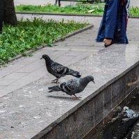 Голуби в сквере (продолжение) :: Павел Нарышкин