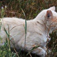я спрятался,я вас не вижу! :: Роза Бара