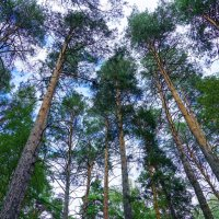 В лесу :: Василий Εвдокимов