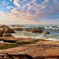 Трава у моря. :: Ron Леви