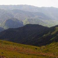 Красная поляна :: Tata Wolf