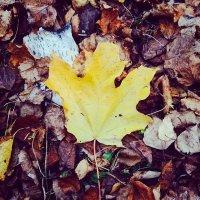 Скоро осень :: Olga Ionina G