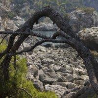 и на камнях растут деревья :: Ангелина
