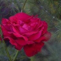 Во саду ли в огороде :: Николай Ярёменко