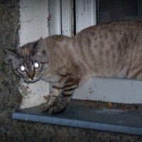 кошка из окошка :: Александр Прокудин