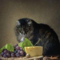 Котенку как-то бог послал кусочек сыра :: Ирина Приходько