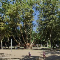 В парке :: АЛЕКСАНДРОВИЧ *