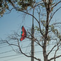 Городская бабочка. :: Алена Малыгина
