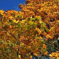 Скоро осень! :: Натали Пам