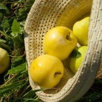 Август пахнет яблоками :: Albina