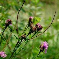работа бабочки : от цветка  к цветку :: Александр Прокудин