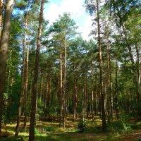 Солнечный лес :: Nina Yudicheva