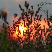 На закате :: Кристина Щукина