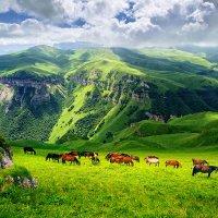 Горное плато. Кавказ. :: Юрий Губков