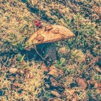 Лесные прогулки! :: Натали Пам