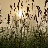 Утреннее туманное рассветное... :: Владимир Гилясев