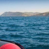 Морская рыбалка :: Roamer Pon