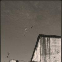Рыбы и чайки :: Алексей Хвастунов