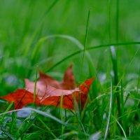 Осень наступает :: Олег