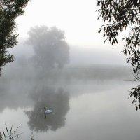 В тумане... :: Alex .