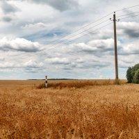 Русское поле :: Дмитрий Сорокин