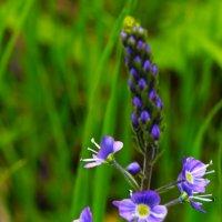 Цветы :: Варвара