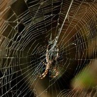 .....паук... :: Георгий Никонов