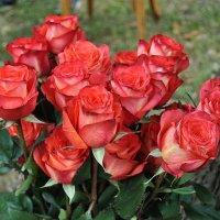Кораловые розы :: Владимир Бровко