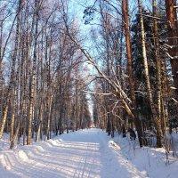 Зимняя дорога, Подмосковье :: Лев