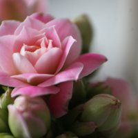 Цветочный мир :: Дмитрий