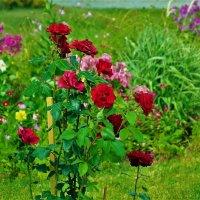 Монастырские розы... :: Sergey Gordoff