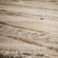 Найди зайца... :: Svetlana Sneg