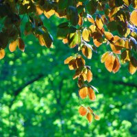 Солнце в листьях :: spm62 Baiakhcheva Svetlana